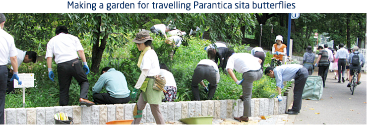 Making a garden for travelling Parantica sita butterflies
