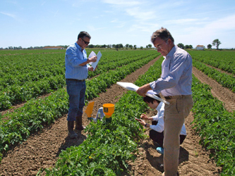 Tests conducted in tomato fields in Portugal